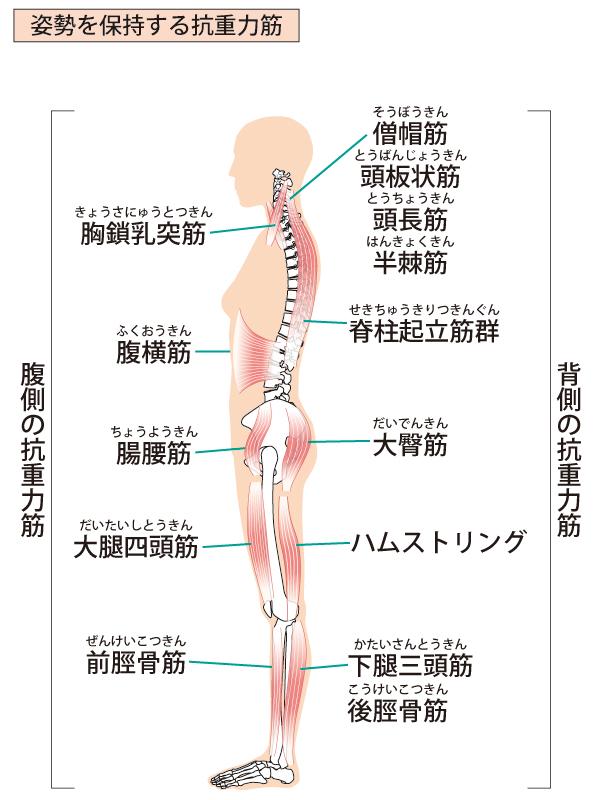 痛い ハム ストリング ハムストリングス症候群  河内長野で太ももの裏の痛み・シビレの治療は「こにしきよあき治療」にお任せください